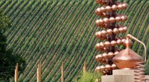 distillerie-francoli-celebrato-il-60-di-fondazione-della-azienda-1515