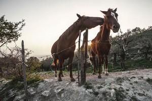 Olevano sul Tusciano: frazione di Salitto