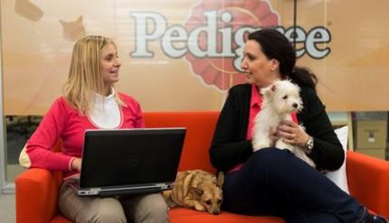 Pet Friendly Day 2015_4