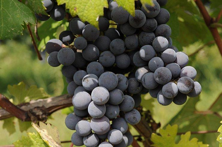 Il sito Unesco dei paesaggi vitivinicoli di Langhe-Roero e Monferrato